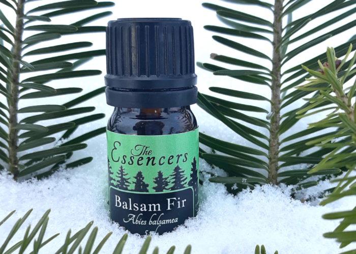 Balsam Fir Essential Oils